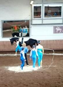 Voltigierpferdeprüfung_Hohenhameln2015